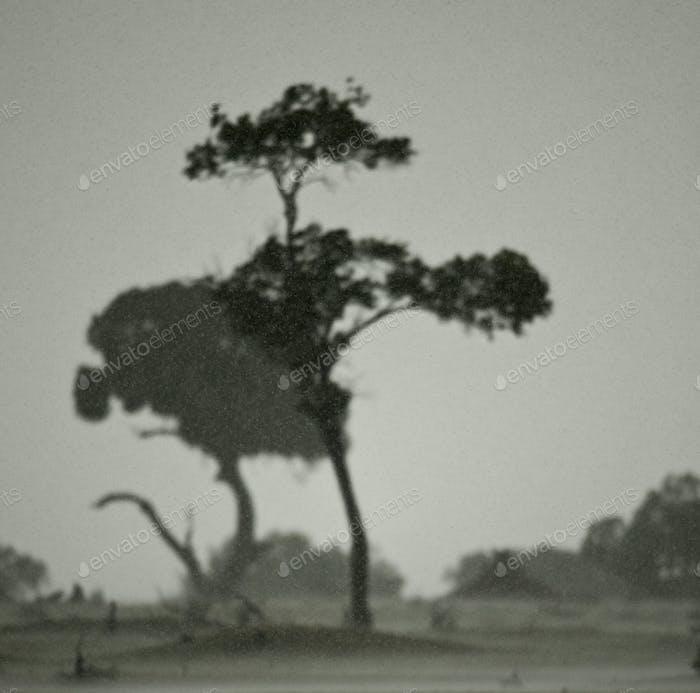 African landscape in rain, Serengeti National Park, Serengeti, Tanzania
