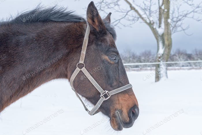 Portrait of horse head in winter