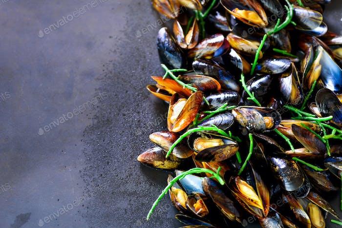 Mussels, molluscs, seaweed, sea plants, ice on old vintage rustic metal background. Top view, copy