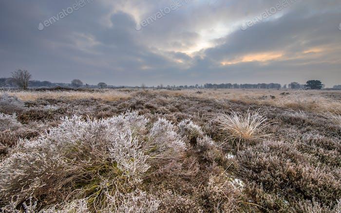 Winter morning sunrise over frosty heather