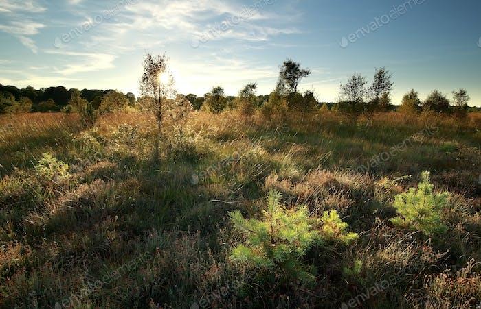 sunshine through bushes and grass