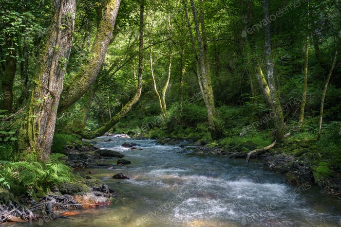 The current of a river winds through native forests