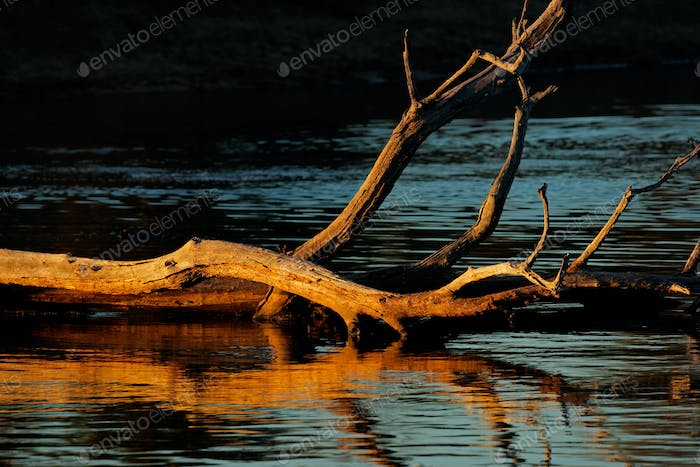 Branches with reflections