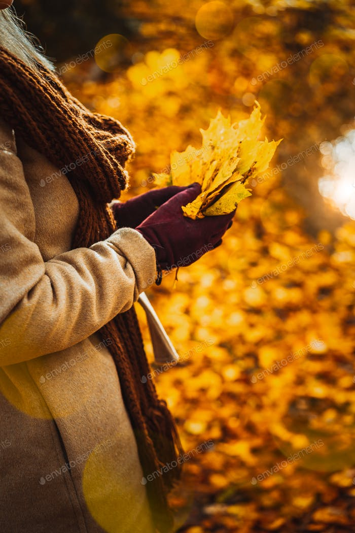 Close up of women hands holding bouquet of yellow autumn maple leaves in her gloved hands. Ground