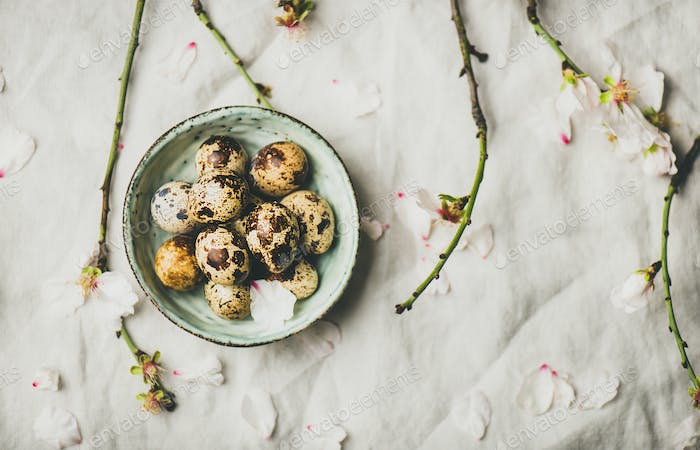 Easter quail eggs and blooming almond tree branches