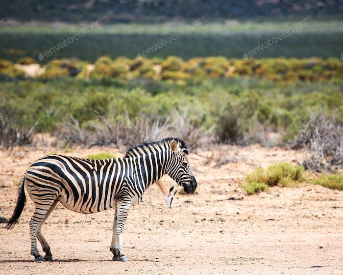 safari in Kapstadt