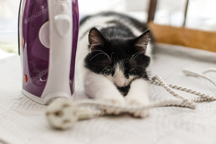 Adorable cat sleeping at iron cable on modern cloth