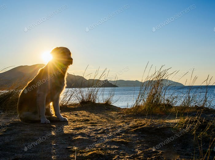 dog standing on a rock