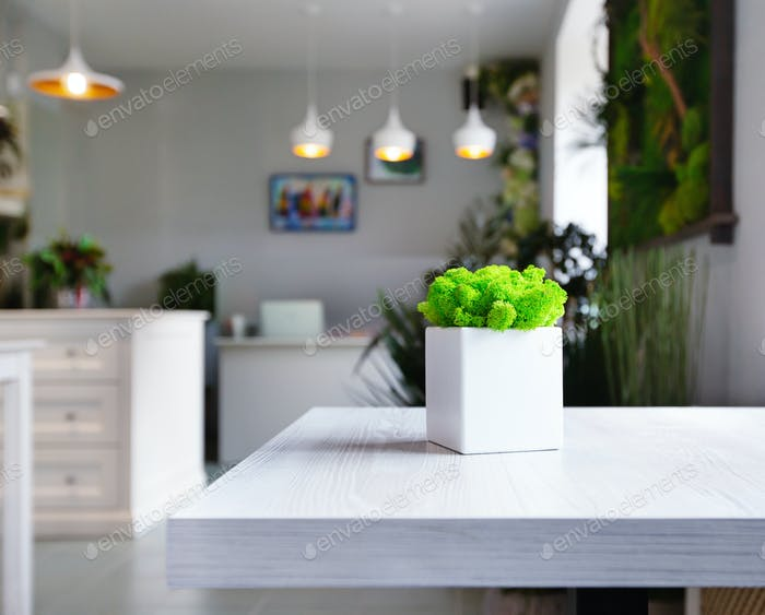Green moss in white flower pot on table
