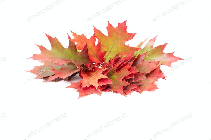 Really colorful leaves on a white.
