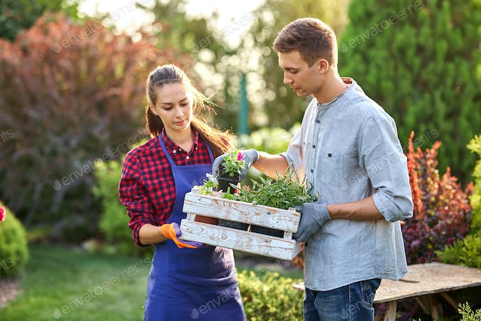 Guy and girl gardeners hold the white wooden box in hands and put there pots with seedlings on a