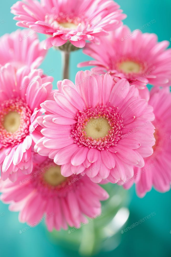 Thumbnail for beautiful pink gerbera flowers bouquet in vase