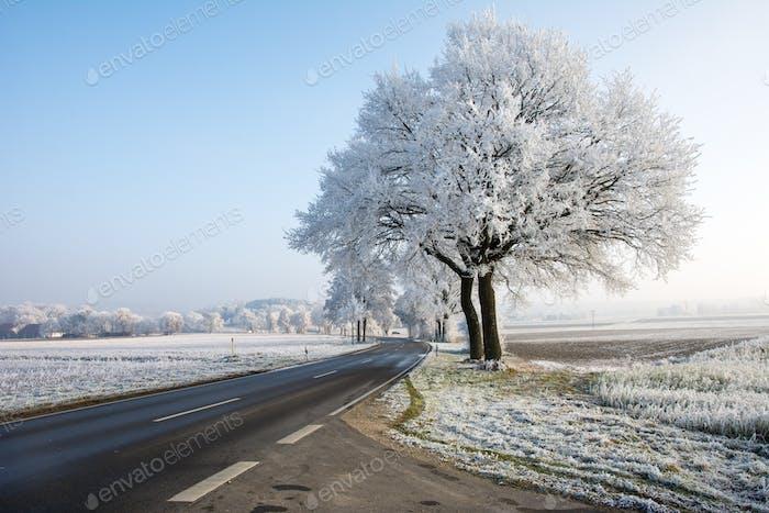 Landstraße in einer Winterlandschaft mit satinierten Bäumen