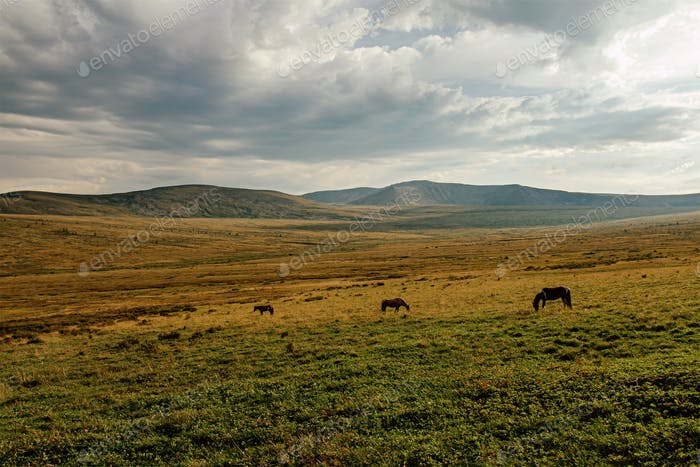 drei Pferde im Bergtal