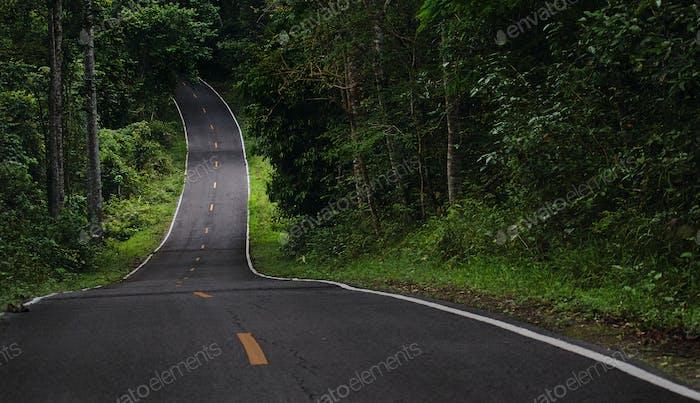 El camino de asfalto recto hacia el bosque