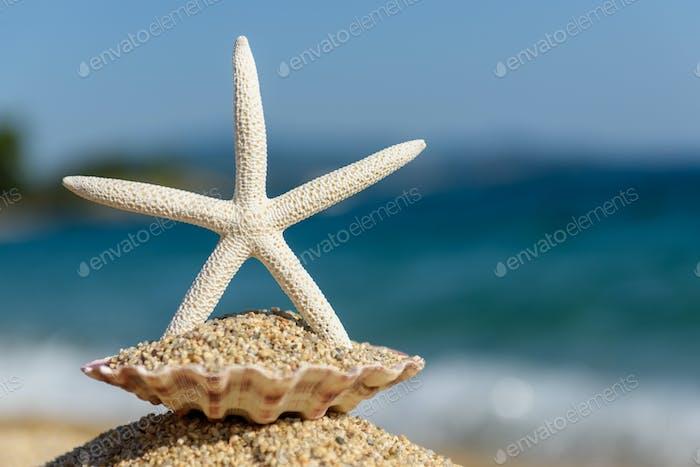 Muscheln auf dem Sand am Meer an einem sonnigen Tag