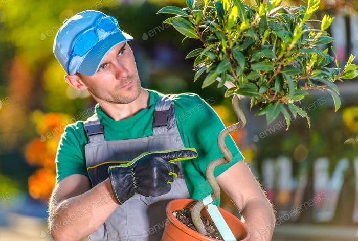 Garden Center Worker Holding Small Tree In Pot.