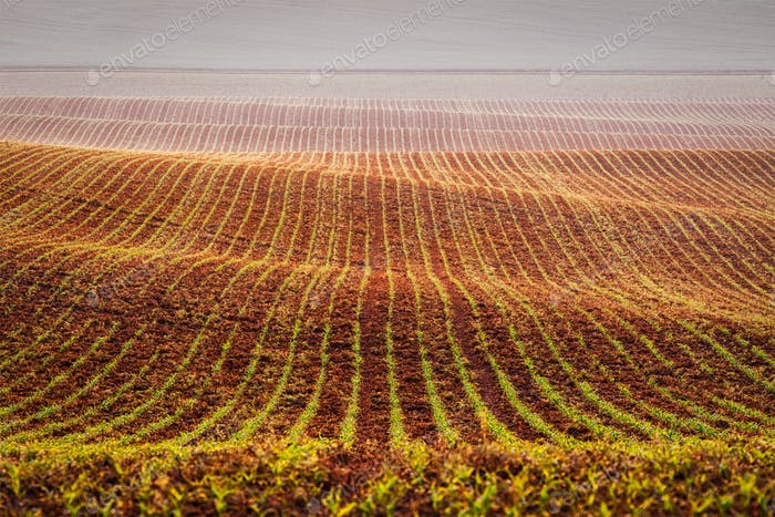 Rolling fields of Moravia