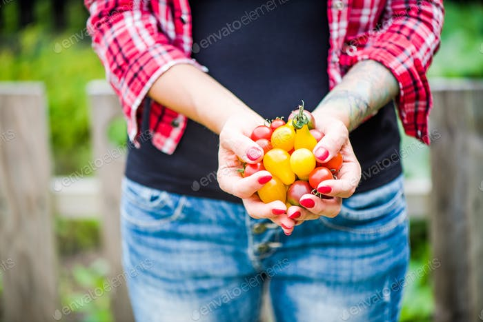 Tatooed millennials girl holding tomatoes  in garden