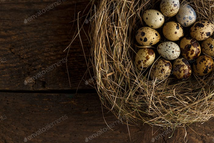 Fresh quail eggs in a nest on a wooden background