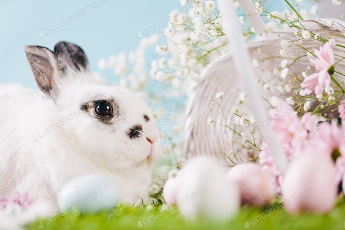 Kaninchen und Osterdekorationen auf Frühlingshintergrund.