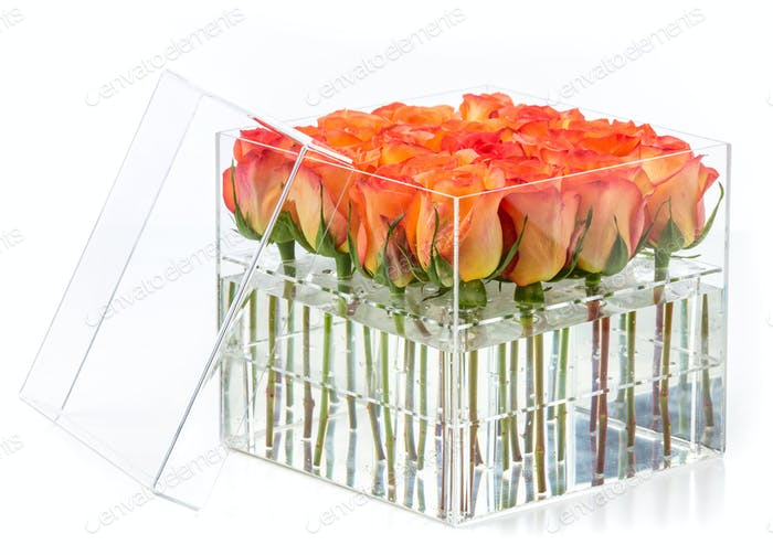 Bunch of orange roses in container over white