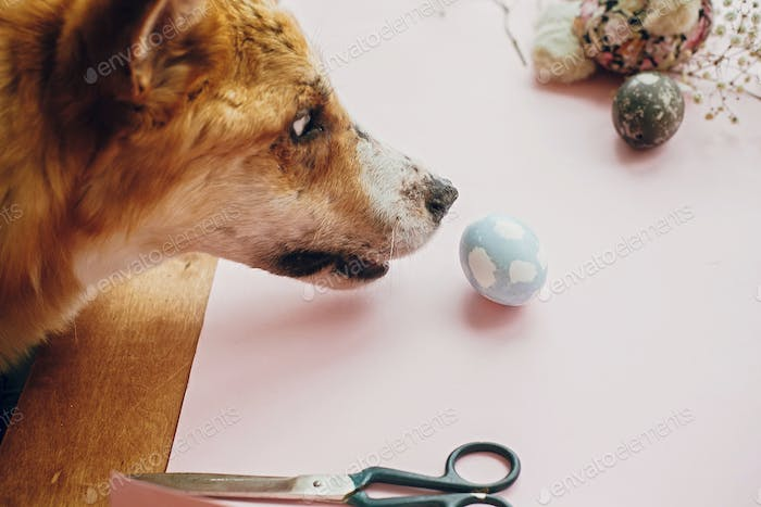 Cute golden dog playing with owner, trying to eat stylish easter egg in room