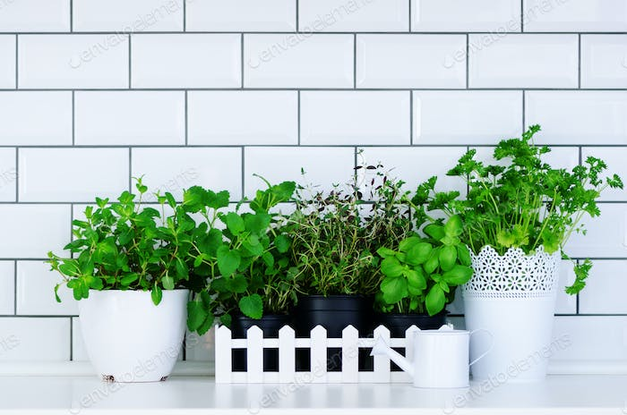 Minimalist kitchen design. Mint, thyme, basil, parsley - aromatic kitchen herbs in white wooden