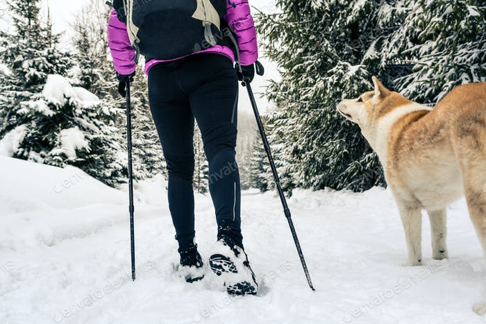Woman hiking and walking in winter forest with dog