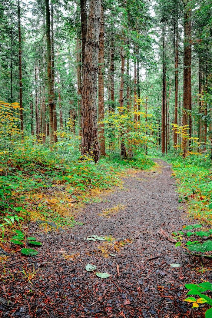 espíritu de frescura en el Bosque de pinos.