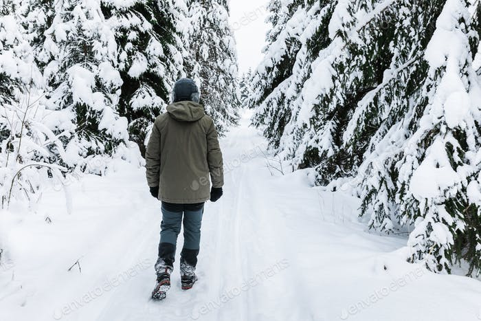 Man walking on snow covered forest. Beautiful winter time. Back view.