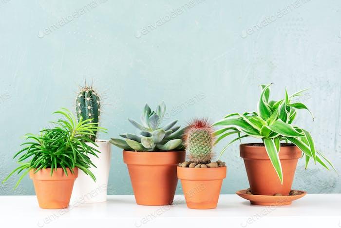 Zimmerpflanzen auf dem Weissen Tisch