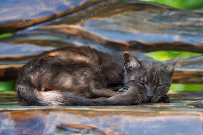 Katze schläft auf der Holzbank