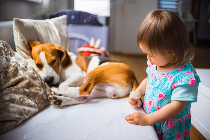 Little baby girl with beagle dog lying on the sofa