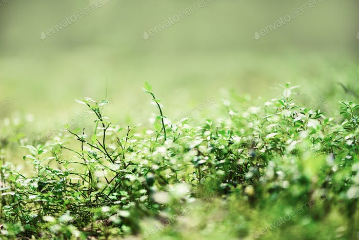 Green natural background, out of focus. Forest bokeh. Banner. Copy space. Blurred abstract texture