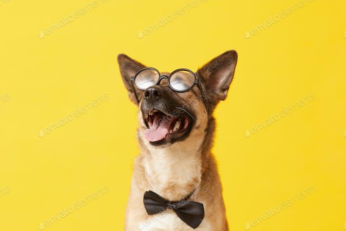Lustiger Hund in Brille