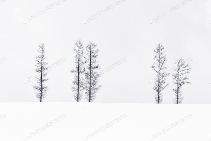 Hermoso Horizontal de rama de Árbol solitario