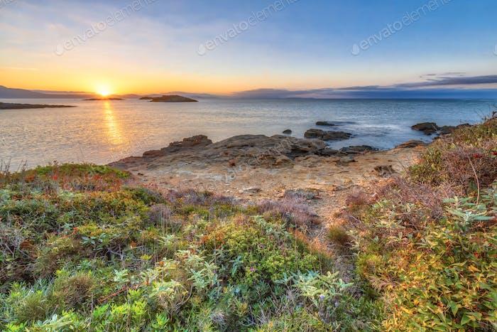 Peloponnese coast coastal vegetation