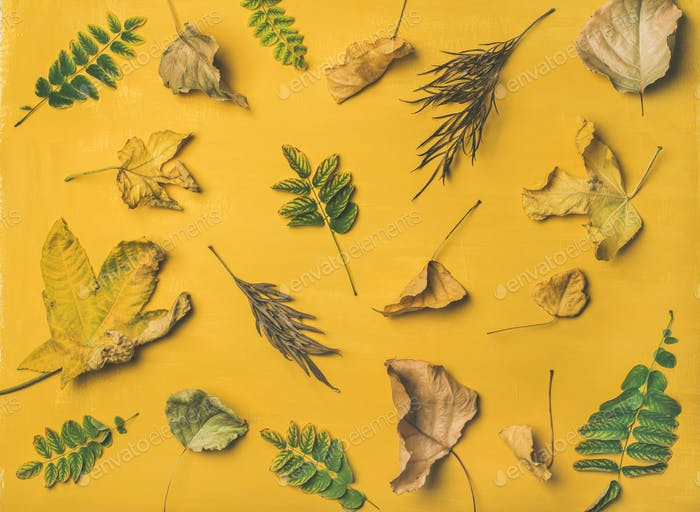 Autumn or Fall pattern, background and texture over yellow background