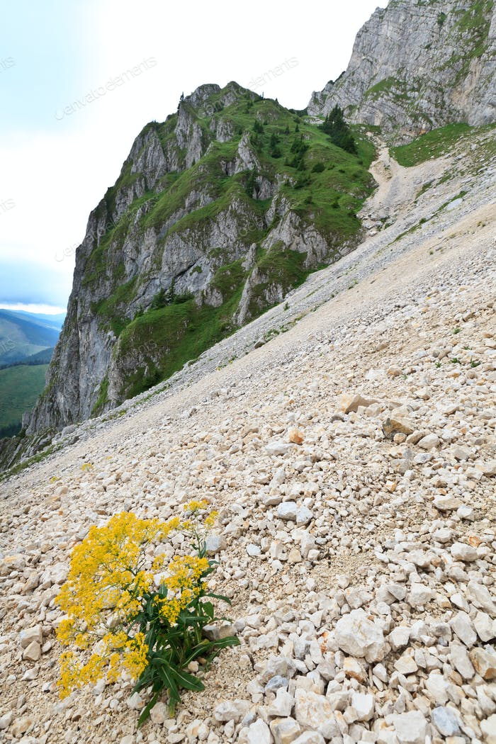 plant on a mountain slope