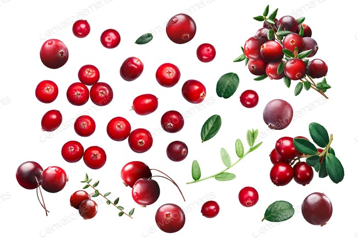 Cranberries and lingonberries, paths