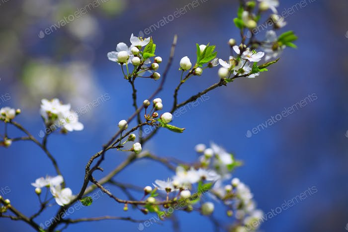 white flowers blooming on branch, springtime