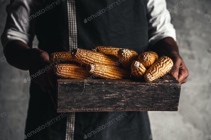 Farmer handles fresh corn in a wooden box
