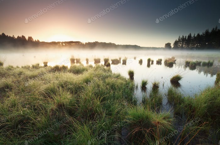 tranquil misty sunrise on wild lake