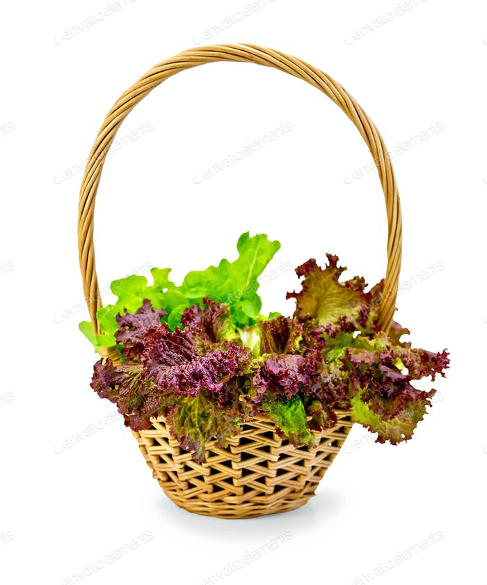 Lettuce green and red in a wicker basket