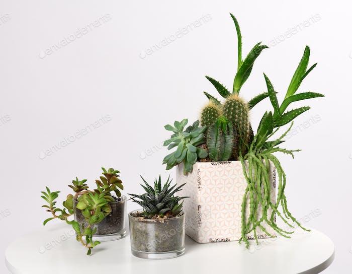 pots with mixed succulent plants