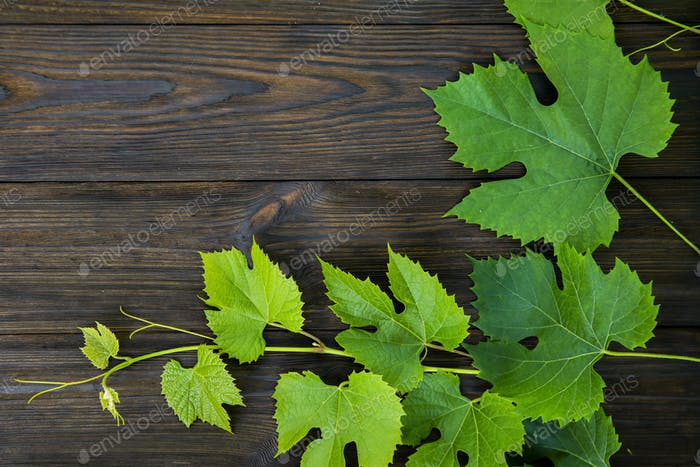 Fresh vine leaves on a wooden background