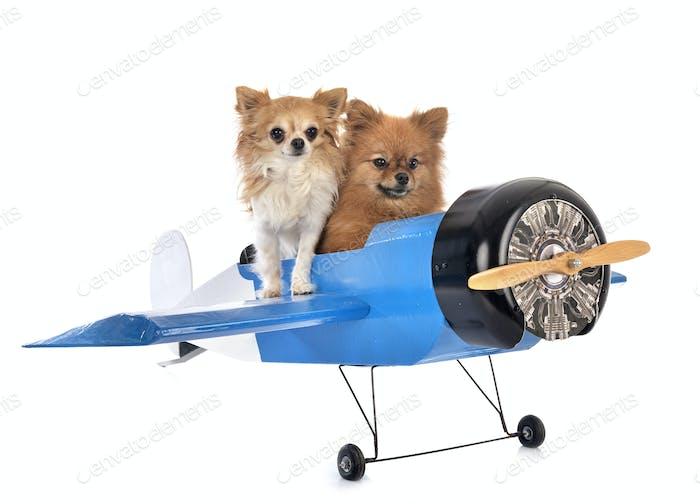 kleine Hunde und Flugzeug