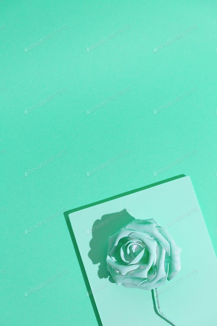 Minimal aesthetic still life monochrome wallpaper. Aqua menthe colours trends.  Roses flowers art