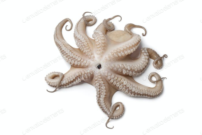 Whole single fresh raw octopus up side down